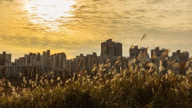 서울 황혼